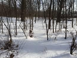 winter mini muir series journal u2014 naturally curious nature walks