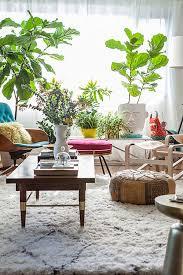 living room displays 13 living room with indoor plants download decorative plants for