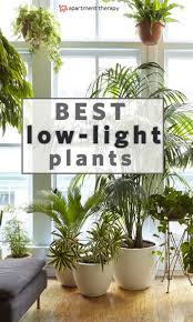 Best Plant For Indoor Low Light Best 25 Apartment Plants Ideas On Pinterest Air Cleaning Plants