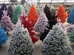 flocked christmas tree paulino gardens fresh cut trees denver colorado