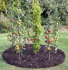 exclusive free liquorice pompom tutorial square foot gardening