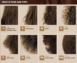 Hair Types by Everything You Need To About Hair Types Hair For