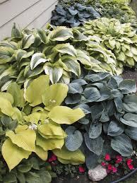 design a woodland garden shade ideas types of gardens ninebark