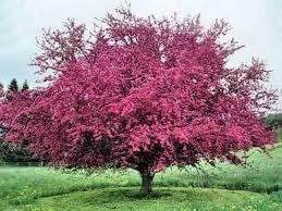 trees shrubs flying w gardens
