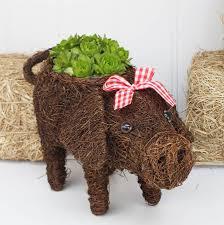 Animal Planter by Micro Pig Planter By Marquis U0026 Dawe Notonthehighstreet Com