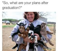 Graduation Meme - so what are your plans after graduation pictures photos and