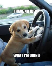 Dog In Car Meme - i have no idea what i am doing driving board pinterest car