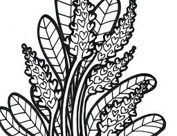 free coloring page of the rainforest tropical bird coloring pages free coloring pages of rainforest plant