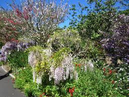 Botanic Garden Sydney Walk At The Sydney Royal Botanic Garden Sydney