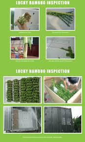 bambou feng shui marchandises en direct chanceux bambou tresses panier d u0027or