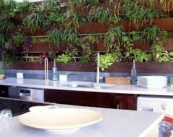 plantes cuisine plantes vertes pour cuisine soins et conseils
