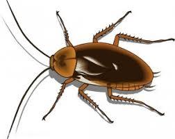 ungeziefer küche motten käfer kakerlaken so halten sie ungebetene gäste aus der