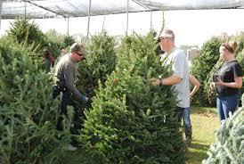 buy a christmas tree help a good cause tbo com