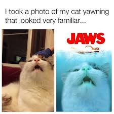 Jaws Meme - it should saw paws instead of jaws lmaoooo meme by amyson