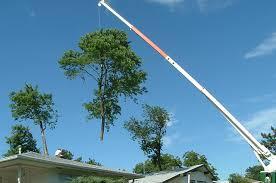 line clearance payne county tree service inc