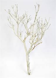 manzanita branches for sale best branches for decorating contemporary decorating