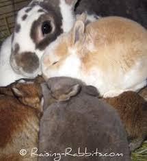 black oil sunflower seeds boss are good for your rabbit rabbit