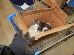 cat left in box at derry walmart new hampshire eagletribune com