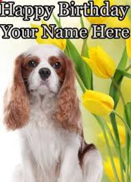 cavalier king charles spaniel a5 personalised greeting card birthday