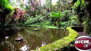 hawaiian landscape design backyard fence ideas