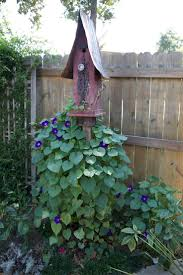 302 best clematis u0026 morning glory images on pinterest morning