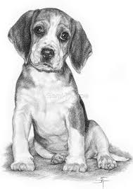 536 best animal drawings images on pinterest drawings draw and