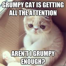 Grumpy Cat Meme Love - grumpy cat is getting all the attention aren t i grumpy enough