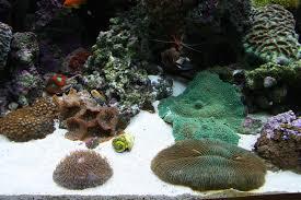 Okeanos Aquascaping Large Custom Living Coral Reef Saltwater Aquariums Nyc