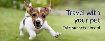 How To Get A Comfort Dog Travelling With Pets Flight Conditions Lot Com