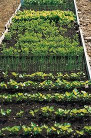 easy care plants vegetables