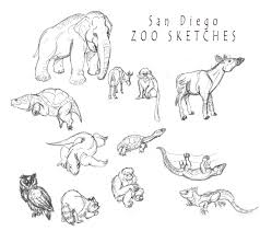san diego zoo sketches by shinragod on deviantart