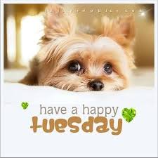 Happy Tuesday Meme - tuesday make it a great one d weekday meme pinterest
