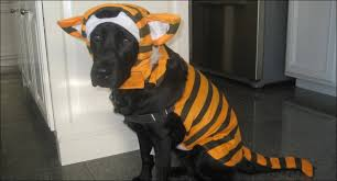 Halloween Costumes For Dogs 10 Best Wild Game Halloween Costumes For Dogs