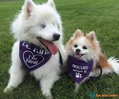 History Of The Blind History Of Incredible Friendship Puppy Took Into Care The Blind Dog