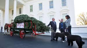 bo and obama receive white house tree
