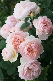 2628 best the poet u0027s darling images on pinterest flowers