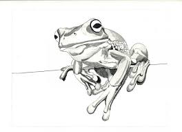 collection of 25 frog sketch