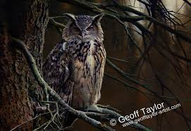 eagle owl in a tree geoff