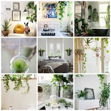 hanging plants indoor gardens and landscapings decoration