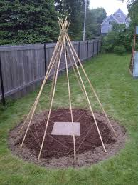 creation of the bean teepee frame beans plants and gardens