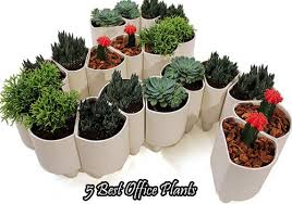 plants for office 5 best office plants office plants