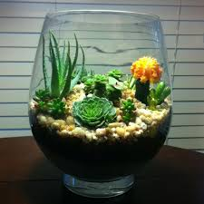 cactus terrariums easy on the eye but sooo hard to manage