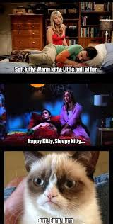 Soft Kitty Meme - 73 best soft kitty parodies images on pinterest cat cats and