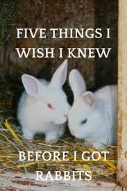 56 best homestead rabbits images on pinterest raising rabbits