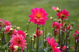 Beautiful Flowers Image Beautiful Flowers Picture