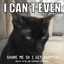 Aspca Meme - spca adopt a meme gifs featuring shelter animals you can adopt