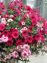 container gardening flowers archives budget gardening
