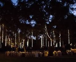 string lights hanging in the trees wedding ideas misc