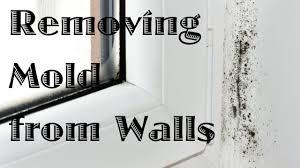 Bathroom Primer Cpiat Com G 2 Mo Mold Killing Primer Home Depot Zi