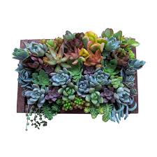 real succulent plants for a hanging wall garden gorgeous colors